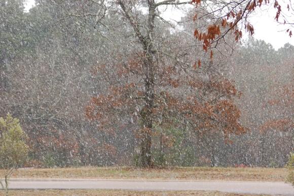 snow feb 10 014.jpg